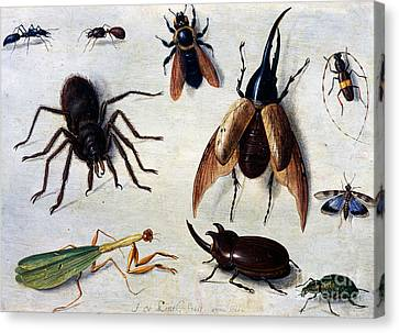 Beetle Canvas Print - Insects, 1660 by Jan Van Kessel