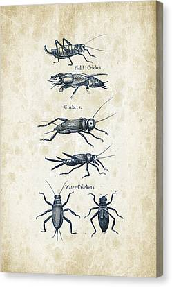 Insects - 1792 - 06 Canvas Print by Aged Pixel