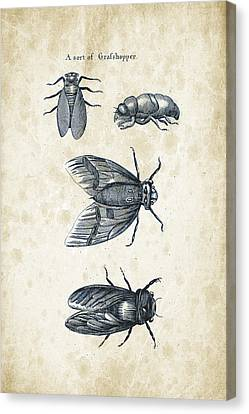 Insects - 1792 - 07 Canvas Print by Aged Pixel