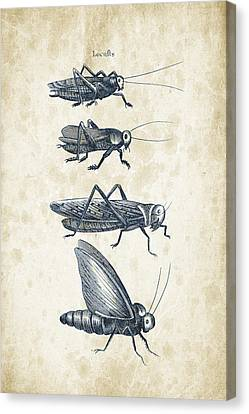 Insects - 1792 - 09 Canvas Print by Aged Pixel