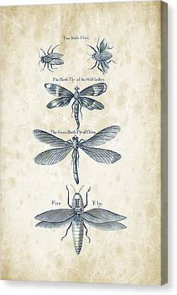 Insects - 1792 - 16 Canvas Print by Aged Pixel