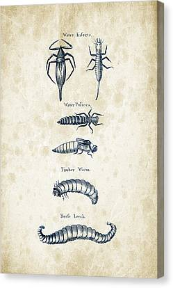 Insects - 1792 - 20 Canvas Print by Aged Pixel