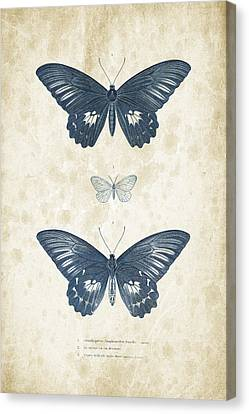 Insects - 1832 - 01 Canvas Print by Aged Pixel