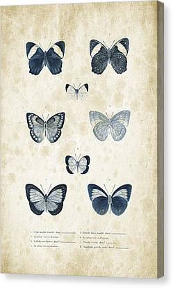Insects - 1832 - 02 Canvas Print by Aged Pixel
