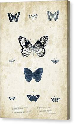 Insects - 1832 - 03 Canvas Print by Aged Pixel