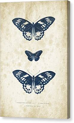 Insects - 1832 - 04 Canvas Print by Aged Pixel