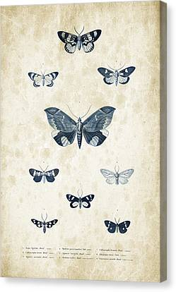 Insects - 1832 - 05 Canvas Print by Aged Pixel