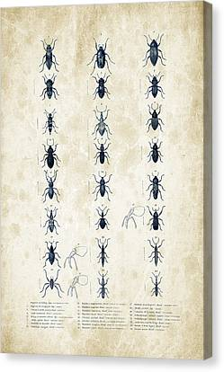 Insects - 1832 - 07 Canvas Print