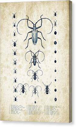 Insects - 1832 - 08 Canvas Print by Aged Pixel