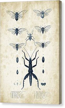 Insects - 1832 - 10 Canvas Print by Aged Pixel