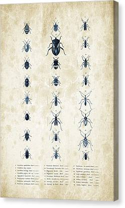 Insects - 1832 - 11 Canvas Print by Aged Pixel