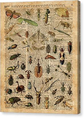 Insects Bugs Flies Vintage Illustration Dictionary Art Canvas Print