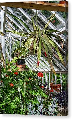 Canvas Print - Inside The Greenhouse by Patricia Hofmeester