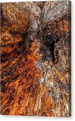 Insides Canvas Print by Wim Lanclus