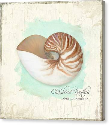 Inspired Coast V - Chambered Nautilus Shell On Board Canvas Print by Audrey Jeanne Roberts
