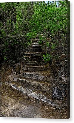 Canvas Print featuring the photograph Instep With Nature V53 by Mark Myhaver