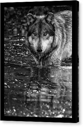 Canvas Print featuring the photograph Intense Reflection by Shari Jardina