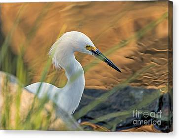 Intent Hunter Canvas Print by Kate Brown