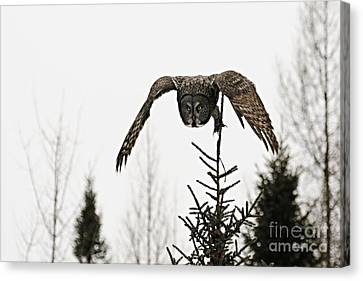 Intent On His Prey Canvas Print