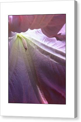Canvas Print featuring the photograph Interiors by Kevin Bergen
