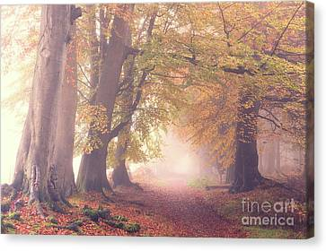 Into The Autumn Canvas Print by Tim Gainey