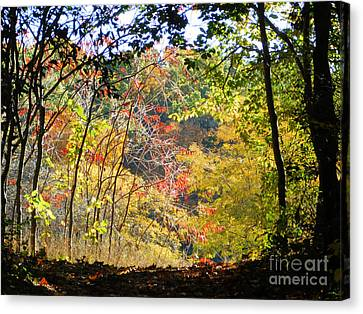 Into The Clearing Canvas Print