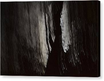 Into The Dark  Canvas Print by Nadalyn Larsen