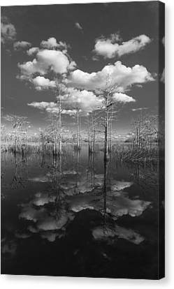 White River Scene Canvas Print - Into The Everglades by Debra and Dave Vanderlaan