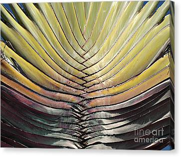 Into The Fold Canvas Print by Joy Angeloff