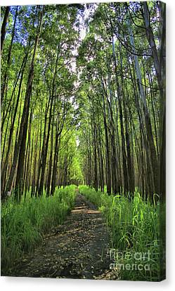 Canvas Print featuring the photograph Into The Forest by DJ Florek