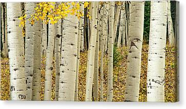 Canvas Print featuring the photograph Into The Forest by Gary Lengyel