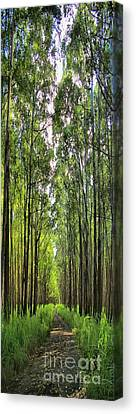 Canvas Print featuring the photograph Into The Forest I Go by DJ Florek