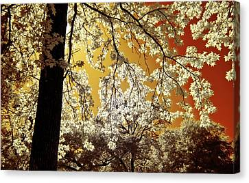 Canvas Print featuring the photograph Into The Golden Sun by Linda Unger