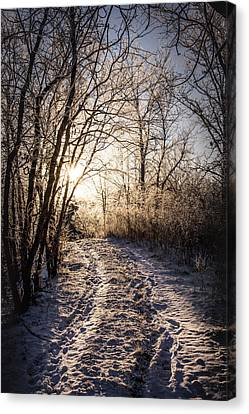 Into The Light Canvas Print by Annette Berglund