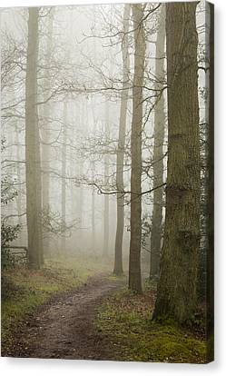 Early Spring Canvas Print - Into The Light by Chris Dale