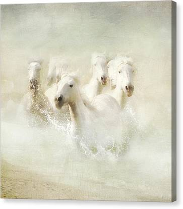 Into The Mist Canvas Print by Karen Lynch