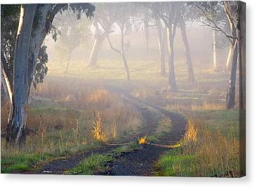 Into The Mist Canvas Print by Mike  Dawson
