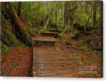 Into The Rainforest Canvas Print by Adam Jewell
