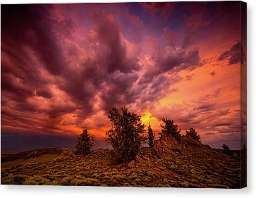 Into The Storm Canvas Print by Dan Holmes