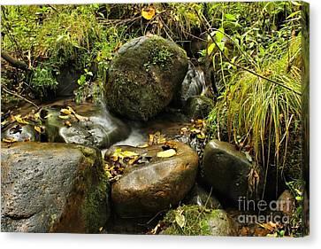Into The Stream 4 Canvas Print