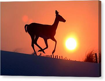 Into The Sunset Canvas Print by Scott Mahon