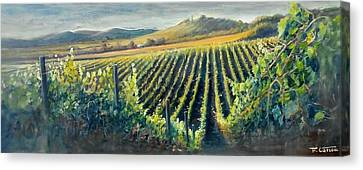 Into The Vineyard - Italy Canvas Print