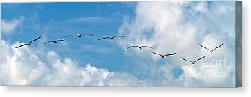 Canvas Print featuring the photograph Into The Wind by Ken Frischkorn