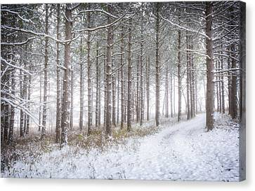 Into The Woods 3 - Winter At Retzer Nature Center  Canvas Print by Jennifer Rondinelli Reilly - Fine Art Photography