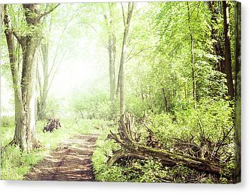 Canvas Print featuring the photograph Into The Woods by Joel Witmeyer
