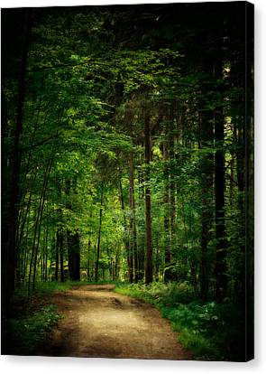 Into The Woods Canvas Print by Lisa Russo