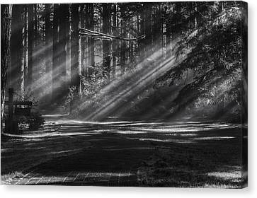 Into The Woods Canvas Print by Mark Kiver