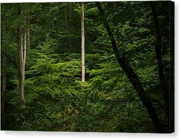Into The Woods Canvas Print by Shane Holsclaw