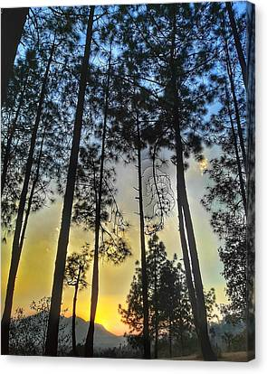 Into The Woods Sunset Canvas Print by Bibhab Koirala