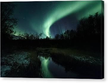 Into The Woods Canvas Print by Tor-Ivar Naess